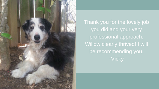 Thank you for the lovely job you did and your very professional approach, Willow clearly thrived! I will be recommending you. -Vicky